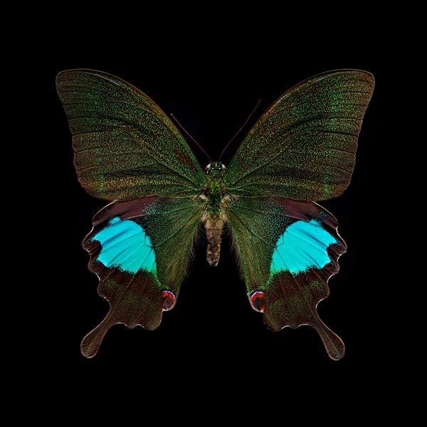 The story of insects, each insect is a piece of art