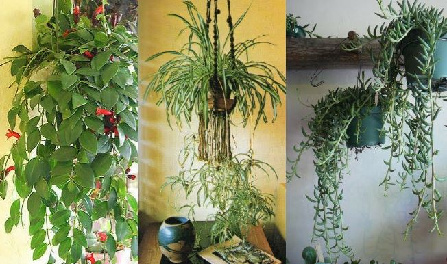 Beautiful hanging plants